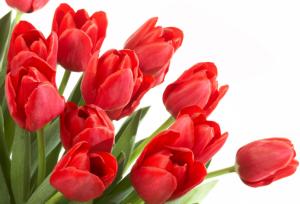 Вітаємо зі Святом Весни!